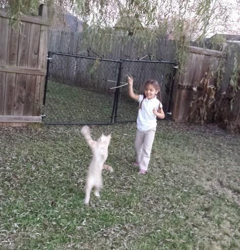 Cat Dance 2